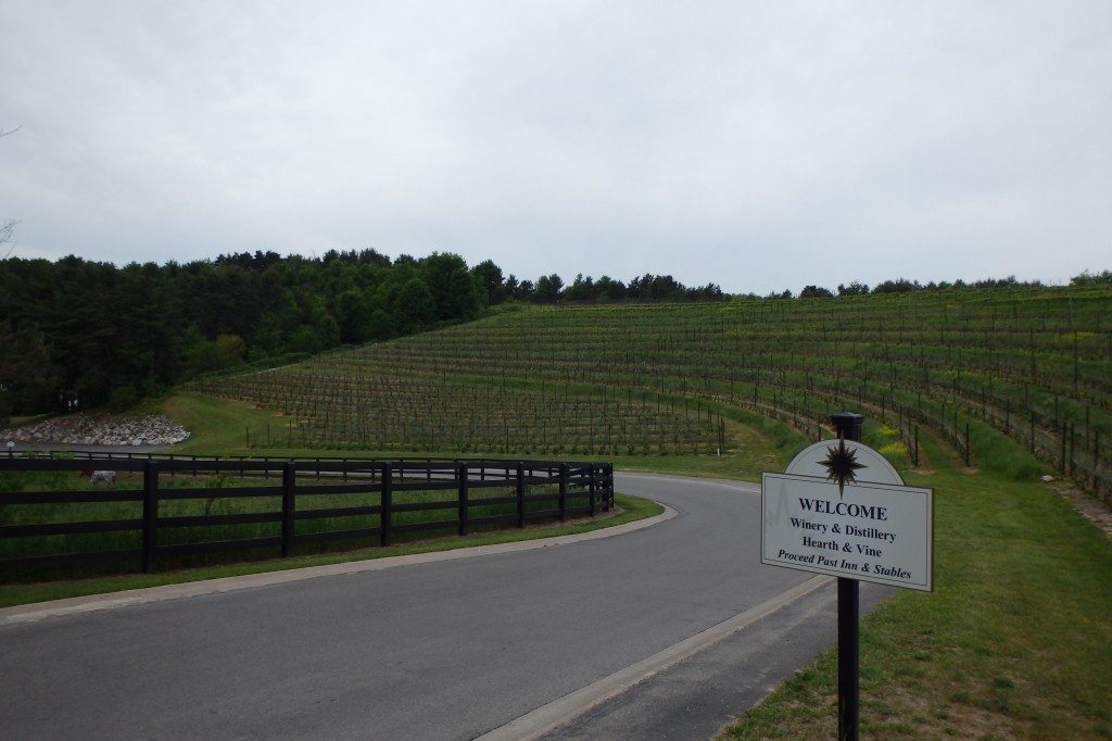 Vineyards along the hillside